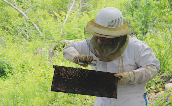 [PIC] CTI Plant and Animal Science Teacher Rebecca Cossa Collects a Swarm Of Bees For Hive Addition