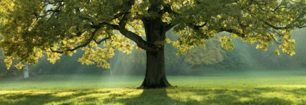 [PIC] Large Tree In A Field Catching Summer Sunlight